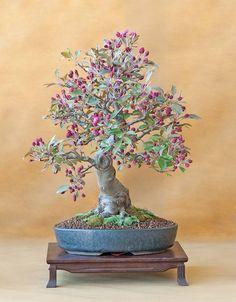bonsai 9