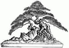 Image result for bonsai drawing