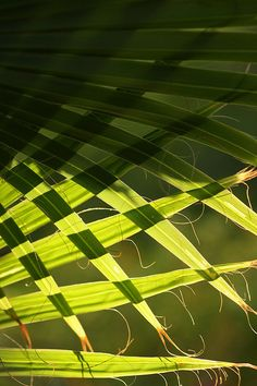 Was weaving/plaiting first inspired by observation?  Palm abstract by kasia-aus, via Flickr
