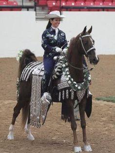 Horse Saddles, Horse Tack, Giraffe Neck, Walking Horse, Horse Costumes, American Saddlebred, The Lone Ranger, Western Pleasure, Majestic Animals