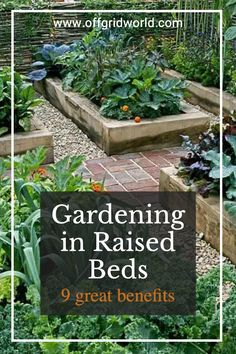 For gardeners with physical limitations, such as back or knee problems, caring for plants in a raised bed alleviates the pains associated with bending over or kneeling on the ground. Here are 8 more reasons to garden in raised beds. #raisedbed #gardening #gardenbeds #raisedbedgardening #gardens #containergardening #growfood Raised Garden Beds, Raised Beds, Knee Problem, Cable Railing, Farm Gardens, Bending, Sustainable Living, Container Gardening, Farming