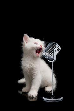 小声なら愚痴、叫べばロック  猫だらけの展覧会「人生はニャンとかなる!」- 埼玉・千葉・大阪で開催 | ニュース - ファッションプレス