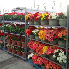 Hanging baskets at St Jacobs Farmers Market Hanging Flower Baskets, Amish, Farmers Market, Best Gifts, Spring, Flowers, Plants, Flora, Plant