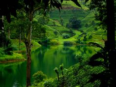 WANDERLUST - SRI LANKA.. have U ever seen this much green anywhere???