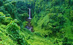 imagini din jungla - Căutare Google Nail, Google, Plants, World, Places, Nails, Plant, Planets