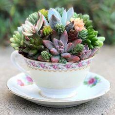 40 Easy DIY Teacup Mini Garden Ideas to Add Bliss to Your Home Fantastische 40 einfache DIY-Teetasse Succulent Gardening, Succulent Terrarium, Container Gardening, Fairy Gardening, Gardening Quotes, Succulent Wall, Succulents In Containers, Cacti And Succulents, Planting Succulents