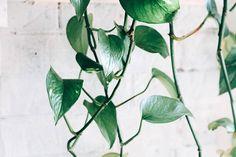 Luxury Indoor House Plants & Floor Plants For Living Room | Carpet One