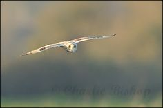 SEO near Chilton Polton, Somerset.    Please follow my wildlife photography on Facebook     Get your websites designed and developed and optimized with  http://www.itop-seo.com