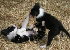 Mixed Martial Arts, Puppy Style!