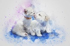 Shop Watercolor Mix Media Kitten & Puppy Kisses Poster created by steelmoment. Watercolor Postcard, Watercolor Cat, Watercolor Illustration, Pet Shop Online, Cute Dogs Images, Friends Poster, Living At Home, Love Pet, Cool Pets