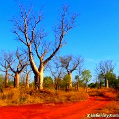Boabs in The Kimberley, Western Australia Australia Map, Western Australia, Travel Oz, Westerns, Australian Desert, Travel Memories, Travel Inspiration, The Good Place, Tourism
