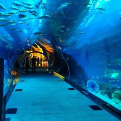 Dubai Aquarium حوض دبي للأسماك - أكواريم