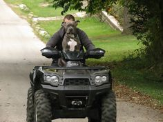 """11 Month Old Puppy.  ATVing.  Knight """"Sabre"""" the #Thunderfoot.  #pitbull"""