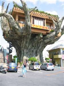 Japanese tree house