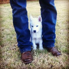 1000+ images about Huskies