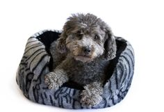 Danazoo Tiger Fleece Cuddler Pet Bed, Gray -- More info could be found at the…