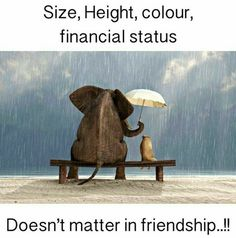 Size , Height , Colour , Financial Status , Doesn't Matter In Friendship Missing Quotes, Great Quotes, Love Quotes, Funny Quotes, Inspirational Quotes, Qoutes, Creation Cv, Friendship Day Quotes, Jokes In Hindi