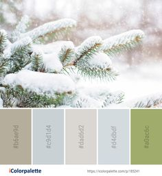 Color Palette Ideas from Winter Branch Tree Image Colour Combinations, Color Schemes, Tree Images, Winter Images, Find Color, Colour Board, Winter Colors, Colour Palettes, Color Theory