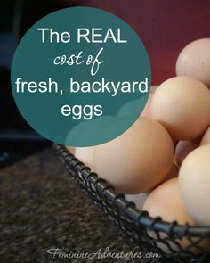If you've ever thought about jumping on the crazy bandwagon of backyard chicken owners, here's a nerdy breakdown of what fresh eggs REALLY cost.
