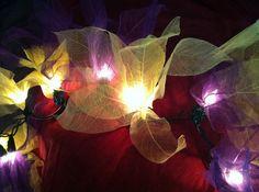 enchanting fairy lights