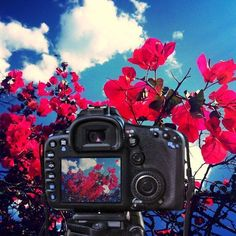 by http://ift.tt/1OJSkeg - Sardegna turismo by italylandscape.com #traveloffers #holiday | #sardegna2015#sardegna_super_pics#sardegnaofficial#sardegnaphotos#lanuovasardegna#boungaville#canon_photography#canon Foto presente anche su http://ift.tt/1tOf9XD | February 18 2016 at 01:51PM (ph veronica_occhineri ) | #traveloffers #holiday | INSERISCI ANCHE TU offerte di turismo in Sardegna http://ift.tt/23nmf3B -