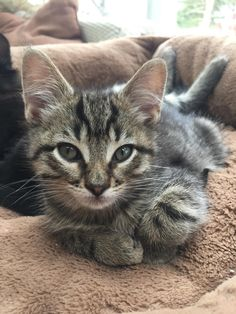 Kitten's first loaf