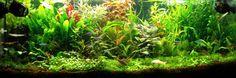 The Jungle Style Aquarium | Aquascaping Love