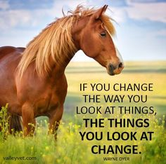 Change the way you look at things Rodeo Quotes, Equine Quotes, Cowboy Quotes, Equestrian Quotes, Cowgirl Quote, Hunting Quotes, Cute Horses, Horse Love, Beautiful Horses
