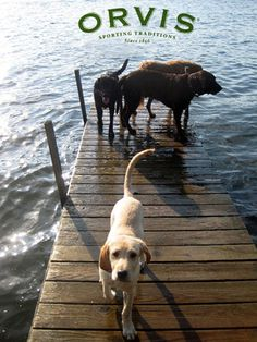 water and Labs go together.