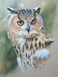 Owl Bird, Bird Art, Pet Birds, Bird Drawings, Animal Drawings, Pencil Drawings, Owl Watercolor, Tattoo Watercolor, Owl Pictures