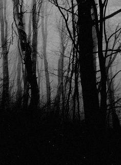 """"""" dark forest """""""