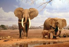25 Amusing Facts about Elephants for Kids: Really Interesting!