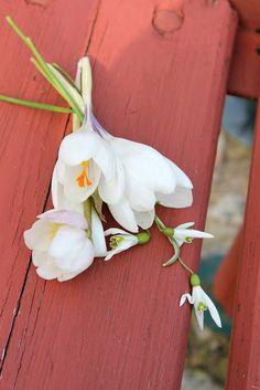 Blumen Flower Easter, Flowers, Plants, Flora, Plant, Royal Icing Flowers, Flower, Florals, Bloemen