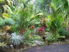 Cordylines, Bromeliads  Palms- Jerry  Cindy Anderson garden
