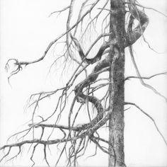 Spruce I.jpg (1920×1920)
