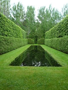 I love Italian gardens for the green on green. Startling. Haunting.