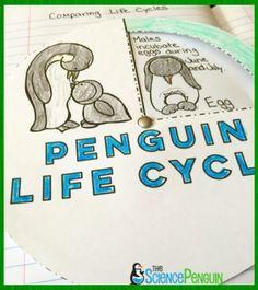 Free Penguin Life Cycle Wheel