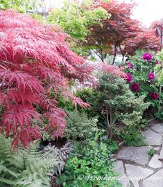 The Japanese Maples at either end of the path | 10 Bushes To Plant Under Trees