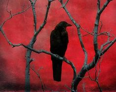Red 10 X 8 Photograph, Raven Art Print, Surreal, Crow Picture, Gothic Decor, Abstract Crow, Crimson, Blackbird, Gothic Art - Red Vision