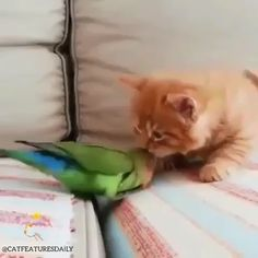 This is mean but it's cute too ! - Cute cats and kittens - Adorable Animals Funny Animal Videos, Cute Funny Animals, Cute Baby Animals, Animals And Pets, Funny Cats, Cute Dogs, Funny Birds, Cute Cats And Kittens, Kittens Cutest