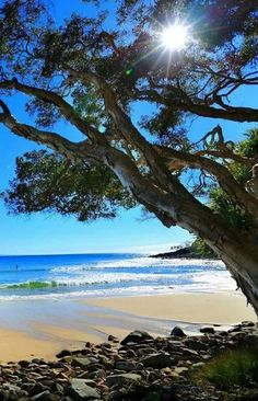 Sunshine Coast for the Love of Travel - NZ Nature Pictures, Cool Pictures, Beautiful Pictures, Belleza Natural, Nature Scenes, Amazing Nature, Beautiful Beaches, Beautiful Landscapes, Beautiful World