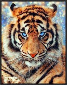 Majestic Animals, Rare Animals, Cute Baby Animals, Animals And Pets, Tiger Pictures, Animal Pictures, Beautiful Cats, Animals Beautiful, Tiger Fotografie