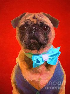 http://fineartamerica.com/featured/colorful-dapper-pug-edward-fielding.html Colorful pug by Edward M. Fielding