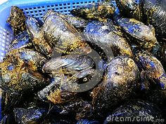 Oysters in blue basket  Close up of whole fresh oysters in blue plastic basket in fish market. Photo taken on: November 12th, 2016