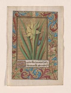 Master of Claude de France Germander Speedwell; Daffodil; and Chicory Three leaves from a Book of Hours France, Tours, ca. 1520 (?) Morgan Library & Museum, MS M.1051.1–3 Purchased on the Fellows Fund, with the special assistance of Mrs. Donald M. Oenslager, 1984