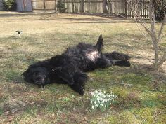 Nothing better then a roll in the grass!