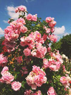 blossom – himmelbuntblog