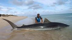 Among 30 sharks caught by two Aussie fishermen, two were mega sharks: a hammerhead shark and a tiger shark weighing more than 770 pounds.