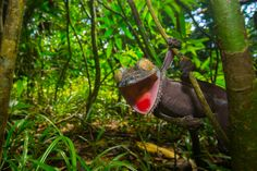 The Secrets to Photographing Rainforest Wildlife