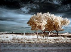 near-infrared-photo-4